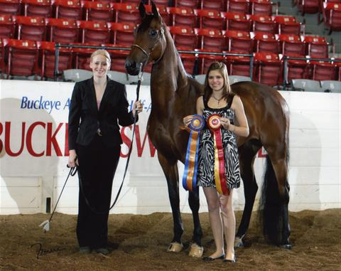 Double Daare Reserve Champion Mare