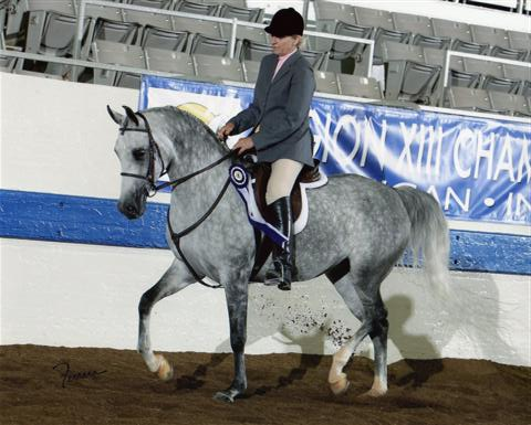 PA Sassporilla Region 13 Top 5 Sport Horse Under Saddle