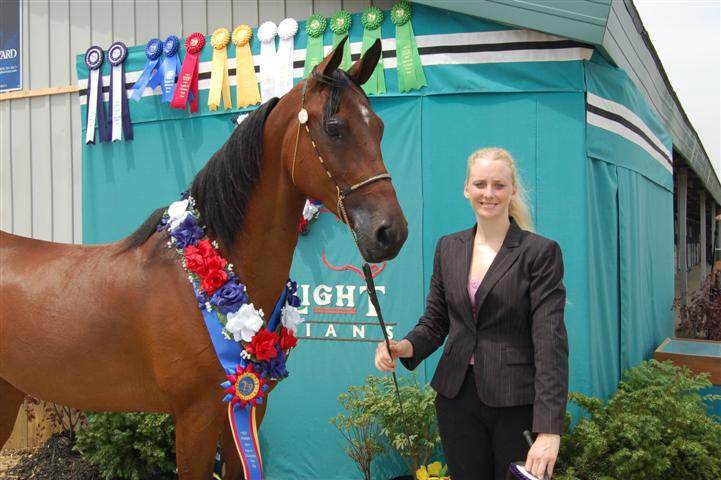 DD Region 14 Champ HA Mare Halter